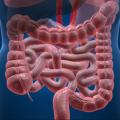 enzimi digestivi nel body building